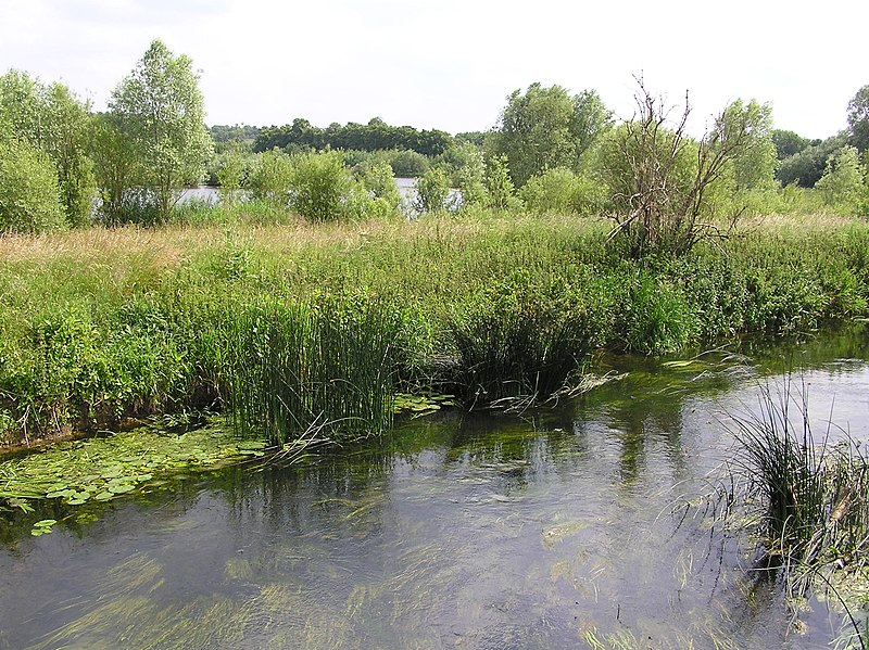File:From the old railway line - Stanwick Lakes - June 2009 - panoramio.jpg
