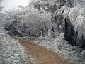 Frost at Little Switzerland - geograph.org.uk - 1344353.jpg