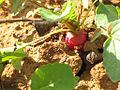 Fruto de la tierra (4395409800).jpg