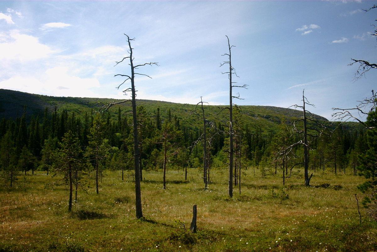 Fulufjället National Park - Wikipedia