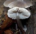Fungi 2 (5199055616).jpg