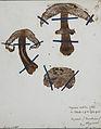 Fungi agaricus seriesI 020.jpg