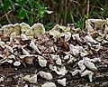Fungus on a Log (5484030846).jpg