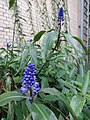 Garden Court - US Botanic Gardens 52.jpg