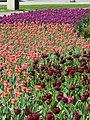Garden of the Provinces ^ Territories, Welington St, Ottawa - panoramio (8).jpg