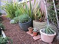 Garden with succulent containers (7230461906).jpg