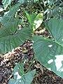 Gardenology.org-IMG 0672 rbgs10dec.jpg