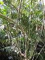 Gardenology.org-IMG 0952 rbgs10dec.jpg