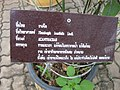 Gardenology.org-IMG 7898 qsbg11mar.jpg