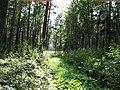 Garkalnes novads, Latvia - panoramio - SkyDreamerDB (10).jpg