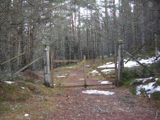 Gate in the forest - geograph.org.uk - 1726119