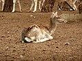 Gaziantep Zoo 1260134.jpg