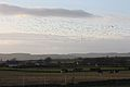Geese, Murlough, County Down, January 2012 (05).jpg