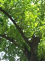 Giardino botanico di Brera (Milan) 328.jpg