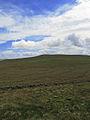 Girtley Hill - geograph.org.uk - 429581.jpg