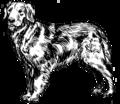 Golden Retriever - Dog (PSF).png