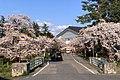 Gosen Awashima Park Sakura April2020.jpg