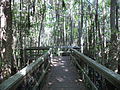 Grand Bay Wetlands Management Area boardwalk 04.JPG