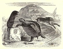 The Tortoise and the Hare - Wikipedia