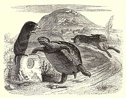 Image illustrative de l'article Le Lièvre et la Tortue (La Fontaine)
