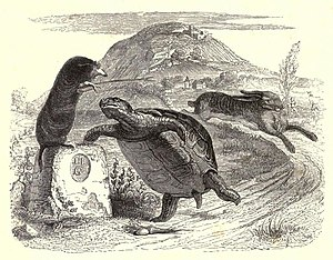 The Tortoise and the Hare - A 19th-century illustration of La Fontaine's Fables by Jean Grandville