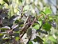 Grasshopper on basil.jpg