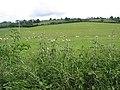Grazing land near Burton Court - geograph.org.uk - 447543.jpg