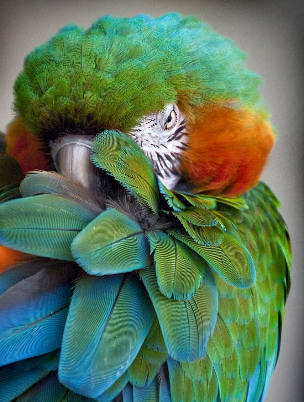 Green beauty1d (8305684500)