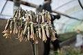 Greenhouses in qom عکس های گلخانه دنیای خار در روستای مبارک آباد قم 22.jpg
