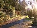 Greenleighs Lane - geograph.org.uk - 1076556.jpg