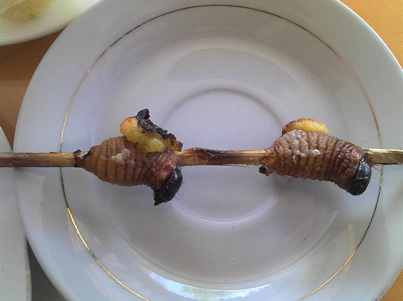 File:Grilled palm maggots, Ecuador.jpg
