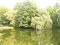 Grosser Stadtparkteich (Greater Town Park Pond) - geo.hlipp.de - 28663.jpg