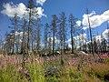 Hälleskogsbrännan juli 2016 (3606).jpg