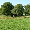 Hügelgräber - panoramio.jpg