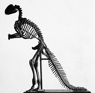 Hadrosaurus - Benjamin Waterhouse Hawkins' mounted Hadrosaurus, the first mounted dinosaur skeleton in the world