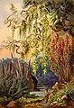 Haeckel 07.jpg