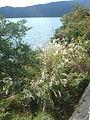 Hakone Ashinoko lake dsc05545.jpg