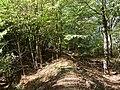 Hambach forest 36.jpg