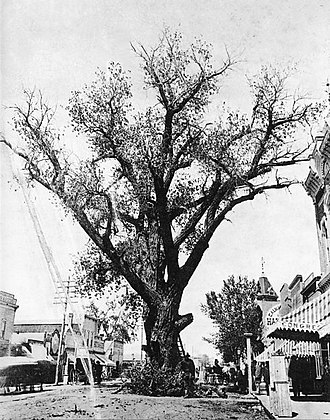 Hanging tree (United States) - Image: Hanging Tree Union Avenue Pueblo Colorado c 1880