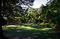 Harcourt Park - panoramio.jpg
