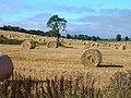 Harvest Time - geograph.org.uk - 629901.jpg