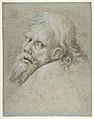 Head of a Bearded Man MET DP802932.jpg