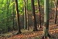 Hemlock Ridge Preserve (Revisited) (1) (15130276037).jpg