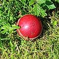 High Beach Cricket Club cricket ball High Beach, Essex, England 2.jpg