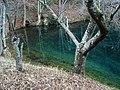 Hiraide Spring 2.jpg