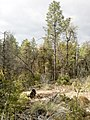 Horton Creek Trail, Payson, Arizona - panoramio (31).jpg