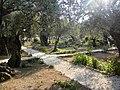 Ierusalim, Muntele Maslinilor (Gradina Ghetsimani)(5).jpg