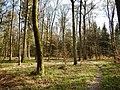 Im Wald zwischen Gärtringen und Deckenpfronn - panoramio.jpg