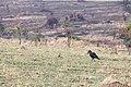 Impressions of Serengeti (117).jpg