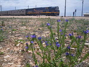 Cook, South Australia - Image: Indian Pacific in Cook, South Australia